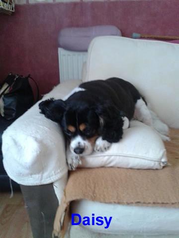 Four paws mobile petdog spa hemel hempstead for 4 paws pet salon